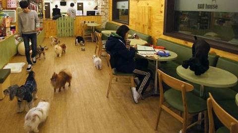 首尔的宠物咖啡店