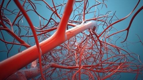 血管通路不是一次性治疗项目 应因人制定不同策略