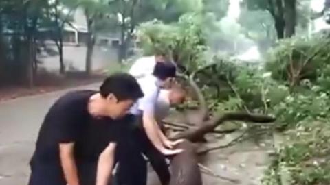 奉贤四团镇一行道树大风中被拦腰吹断 道路通行受限