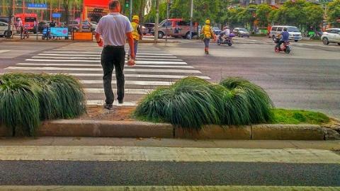 横道线被绿化带隔断 绕走危险 直走毁绿 咋办?