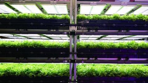 """为植物定制""""光配方"""" 上海首座""""气雾培""""植物工厂育出高产无污染蔬果"""
