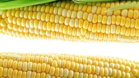 黄白相间、皮薄脆甜、不怕高温与洪涝,这些上海特用玉米将上百姓餐桌
