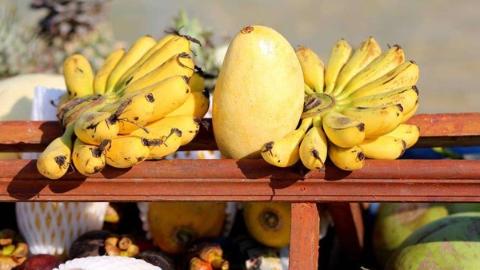 任溶溶:说香蕉和芒果