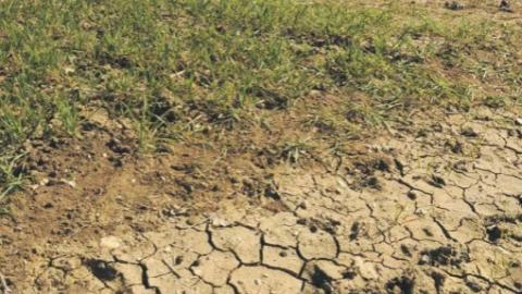 荷兰高温橙色预警,创下42年来干旱纪录