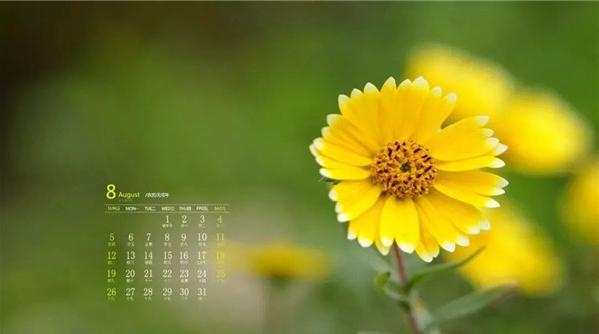 八月上海不可错过的花展园艺活动,安排起来!