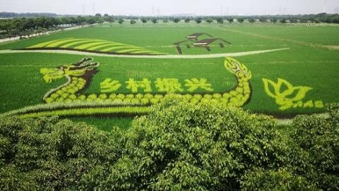 【新时代新作为新篇章】稻田也能五颜六色,好看又好吃!上海市农科院彩色稻新品种选育取得突破