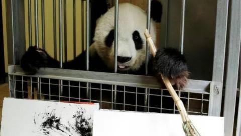 """这只旅居维也纳美泉宫动物园的大熊猫已晋升""""网红画家"""""""