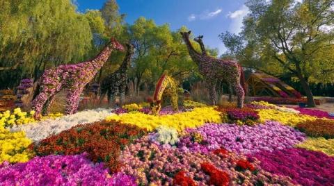 9月,去魔都各大公园赏精彩花展