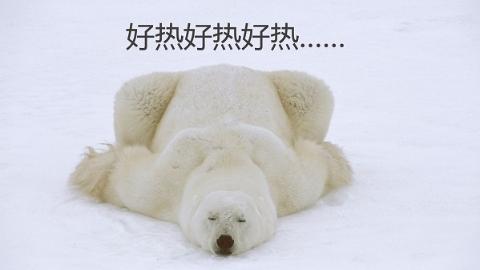 """北极熊要热得灭绝了?口服""""网红药丸""""就能防晒美白?八月份的科学流言榜!"""