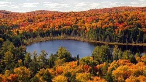 天下游 | 加拿大迎来一年中最美季节