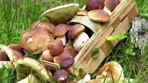 四海城事 | 超量采蘑菇,德国老人被开天价罚单