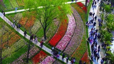 改革开放再出发|推门见绿,散步见绿,绿化满申城