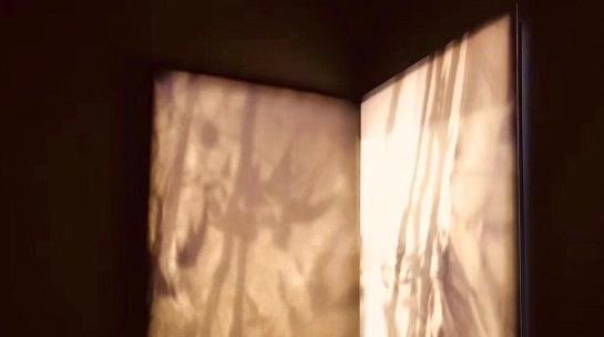 斜阳下,去给闲草影子拍十万张照,为了小小的诗意摄影展