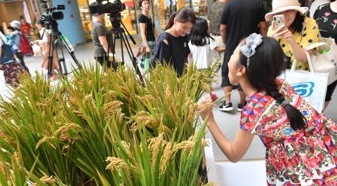 6斤米298元,不用化肥和农药……限量版崇明国庆米今开售
