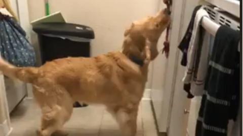 我们是家人!美一狗狗开冰箱叼甜饮救主人命