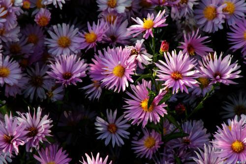 林白:以字为花,遥遥致意
