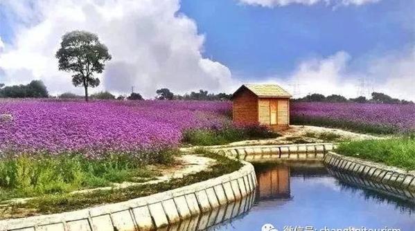 """现在流行赏草?!十处上海当季新景给你""""种草""""了"""