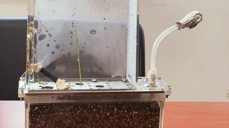 太空中花儿都开了!天宫二号植物实验有望解决星际之旅食物难题