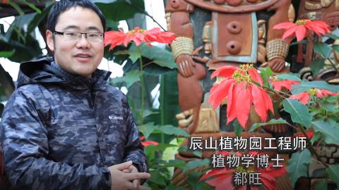 """""""花·视界""""新年上线 听""""网红""""博士诉说植物之美"""