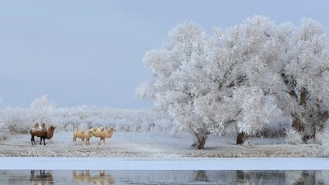 """新疆有座""""童话边城""""一下雪就美成油画 冰雪定制游走俏沪上"""