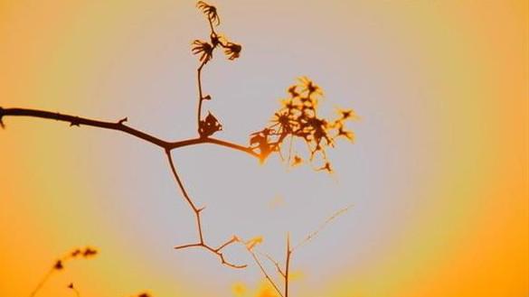 冬日里,孵太阳