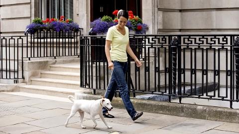 """""""每次遛狗不能多于4条"""":英国出台指导手册规范遛狗者行为"""