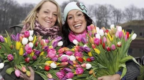 天下游   荷兰本周六迎来国家郁金香日