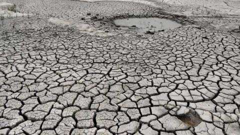 就像干旱的土地渴求雨水