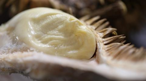 """6千多元一个的榴莲你吃过吗?印尼一商场推出""""天价""""榴莲"""