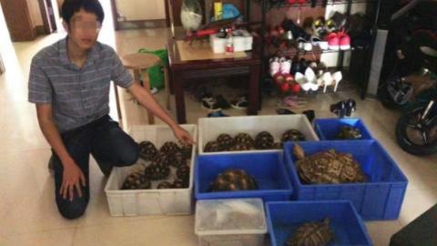 徐汇警方破获非法收购、出售珍贵、濒危野生动物案 8名嫌疑人被抓