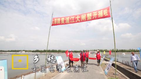 上海时刻·乡愁丨连续八年蝉联全国大赛金蟹奖的黄浦江大闸蟹,究竟好在哪儿?