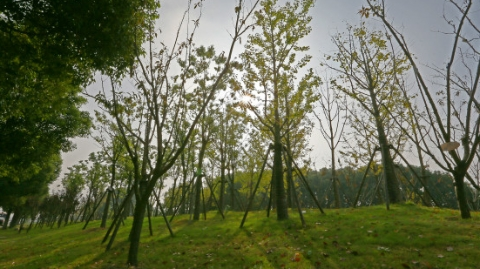 绿染茸城:松江开展史上最大造林行动 年底6000多亩全部完成