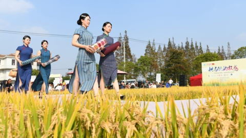 当怀旧土布遇上时尚潮流,崇明举行稻田创意时装秀