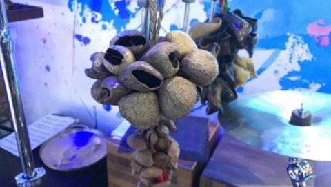 驴牙齿、羊趾甲、干果壳……请来进博会中国馆香港展区,看小众乐器的奇妙演出