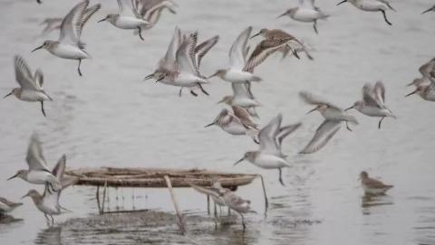 我和我的临港丨从痴迷观鸟到守护湿地,他喜欢临港的理由很特别
