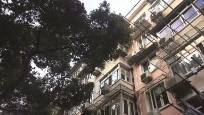 """曾经为城市添绿,如今却给居民添堵""""大树扰民""""难题究竟怎么破?"""