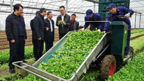 """蔬菜生产中""""四个老人三百岁""""怎么办?上海推进绿叶菜全程机械化生产"""