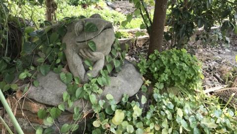 """我·青吴嘉 台湾""""青蛙爸爸""""的长三角乡村梦"""