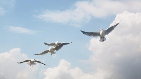 浦东南汇东滩湿地候鸟为何频频死亡? 罪魁祸首原来是它……
