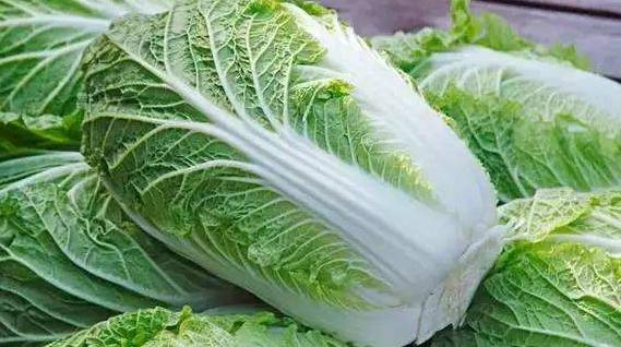 十日谈 | 一叶叶依恋,一层层紧箍,跟着时令吃白菜,鲜鲜鲜