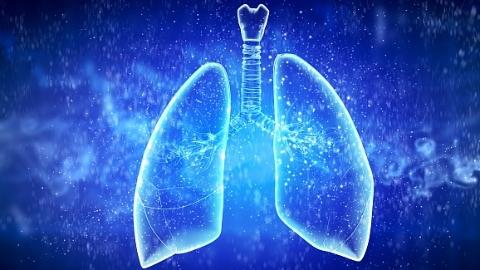 """上海科学家研究发现:肺多能干细胞""""跨界""""参与肺脏再生"""