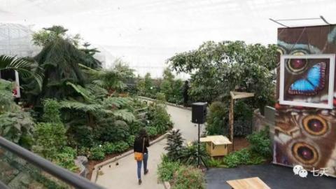 蒙特利尔植物园举办蝴蝶展