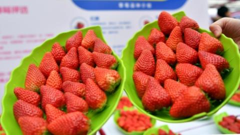 上海时刻·乡愁|白鹤草莓文化节来啦! 新零售打响新品牌