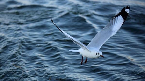 黄浦江上见海鸥