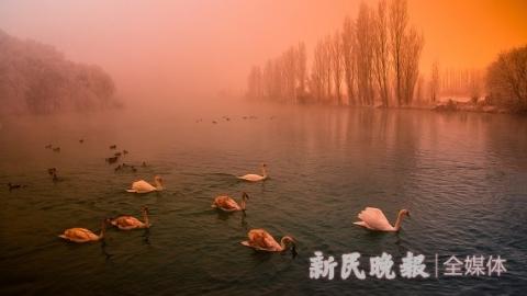 旅摄视角 | 伊宁天鹅雾中起舞