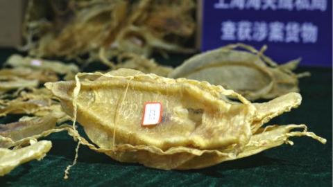 继全国首案宣判后,上海海关再次截获上千万走私加湾石首鱼鱼鳔