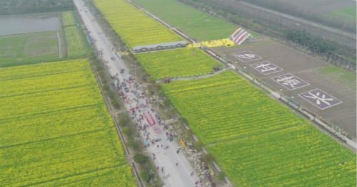 上海奉贤菜花节今开幕,景区优化让赏花更纯粹