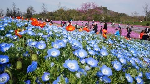 国际花展正缤纷 牡丹丛中听评弹 清明上海公园共接待游客355余万人次
