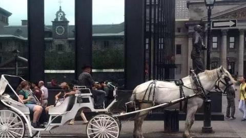 蒙特利尔观光马车将退出历史舞台