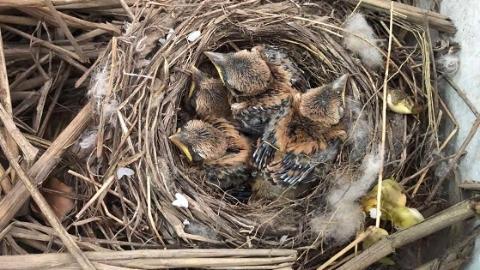 小朋友玩耍时收留一窝小鸟 林业部门安置保护